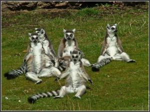 galerie-membre,lemurien,branfere-7