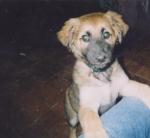 zaz_puppie_500