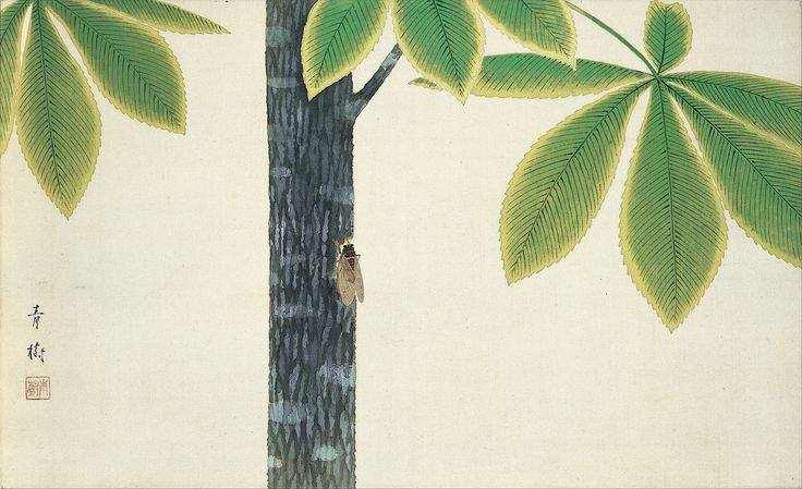 cicada, Seiju Omoda
