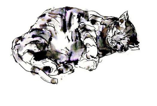 Le chat, dessin de John Berger